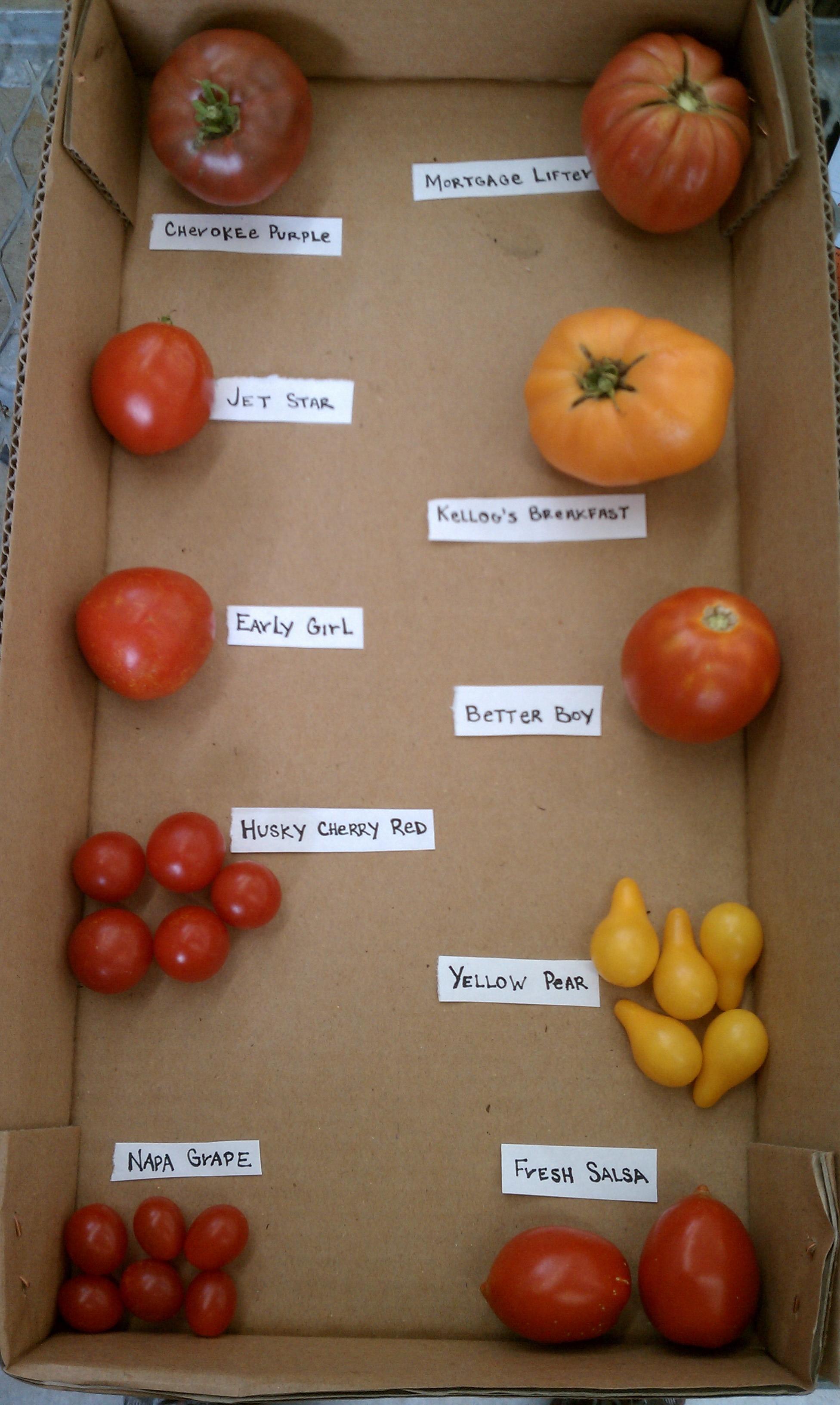 Tomato Showdown – Heirloom vs. Hybrid | Romence Gardens ...